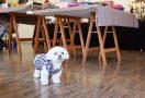 アートギャラリーの看板犬・サニー | 連載2